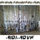پخش پارکت و پخش کاغذدیواری حسینی