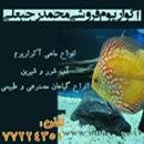 آکواریوم فروشی محمد رجبعلی
