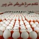 تخم مرغ فروشی علی پور