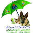 بیمه درمان حیوانات خانگی